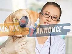 Assistante vétérinaire