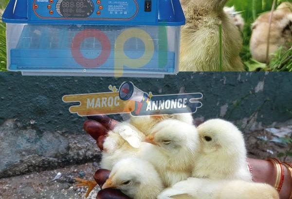 Machine d'incubation 60 œufs