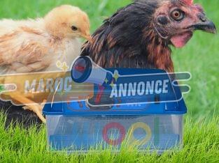 Couveuse Incubateur œufs Numérique