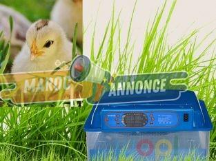 Incubateur peut incuber 60 œufs à la fois