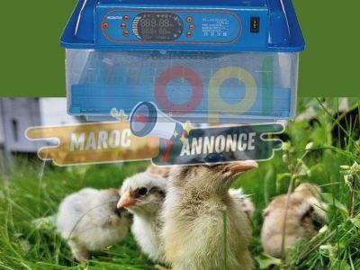 Incubateur D'œufs Plus Diversifiée