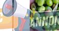 Peigne vibreur électrique pour récolte olives